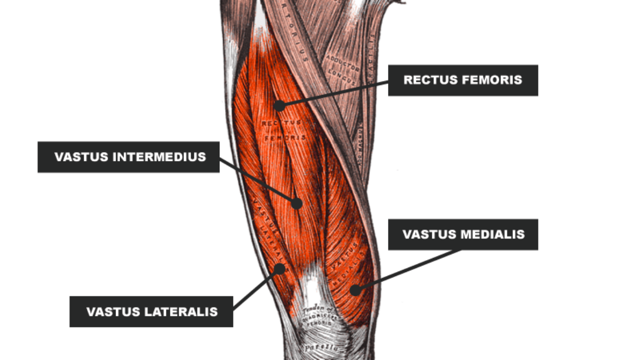 Najlepsze ćwiczenia na mięsień czworogłowy (4-głowy) uda