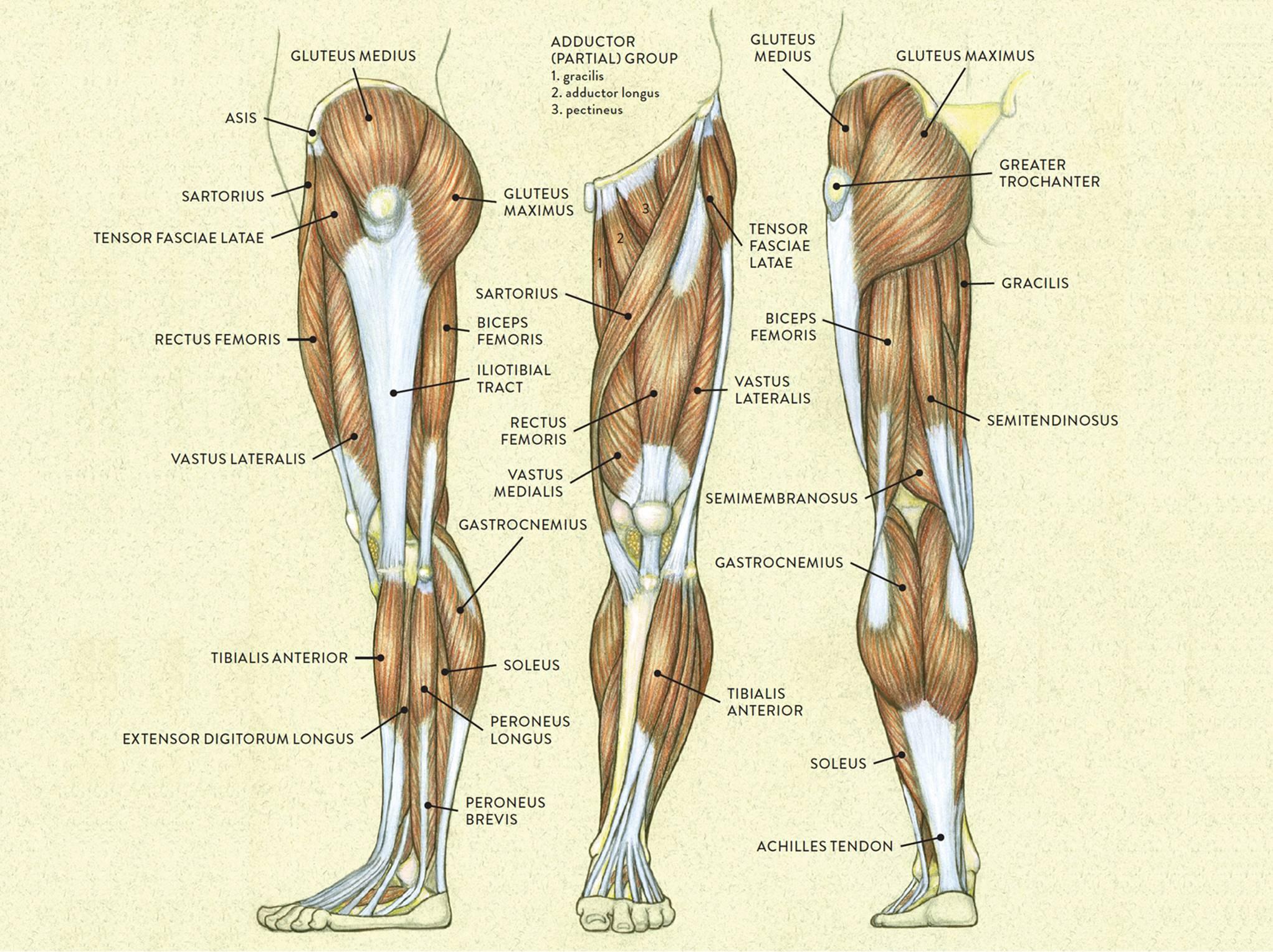 Trening nóg (ćwiczenia na nogi), który działa również w domu
